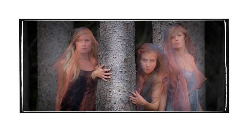 Skogens rå