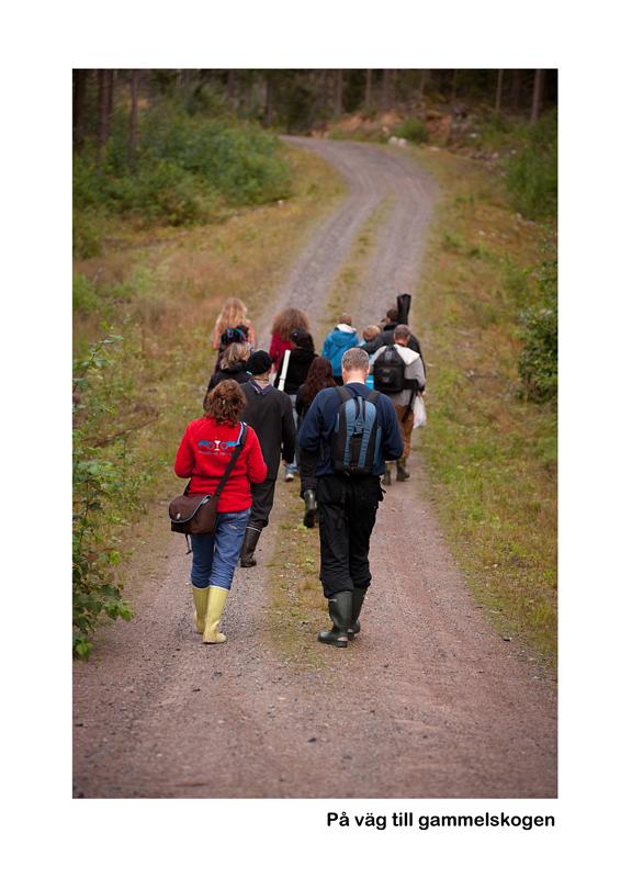 På väg till Gammelskogen