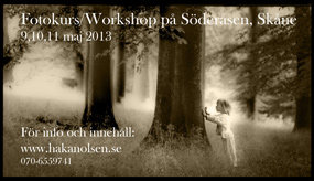 Workshop Söderåsen
